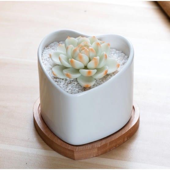 ⓒ超美極白愛心型陶瓷花盆(含竹墊片) 多肉植物組盆盆栽【BI10003】