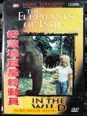 影音專賣店-P07-508-正版DVD-電影【歌蒂韓VS亞洲象】-