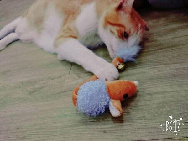 ☆國際貓家25元商品消費滿額加價購(500元以上)☆精靈鈴噹老鼠