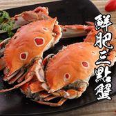 精選鮮肥三點蟹*1隻(淨重100g-150g/隻)