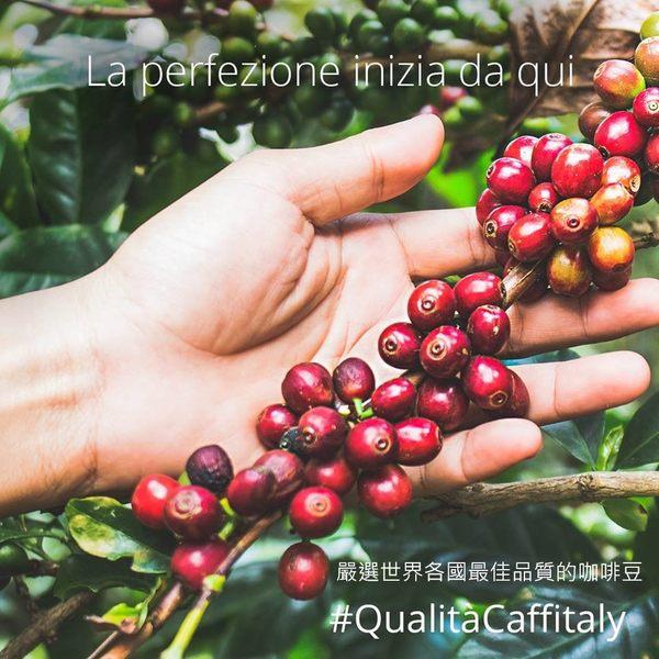 Caffitaly [經典榛果愛戀 10顆裝] 伯朗咖啡膠囊 燦坤Tiziano 聲寶膠囊咖啡機適用 EZcap