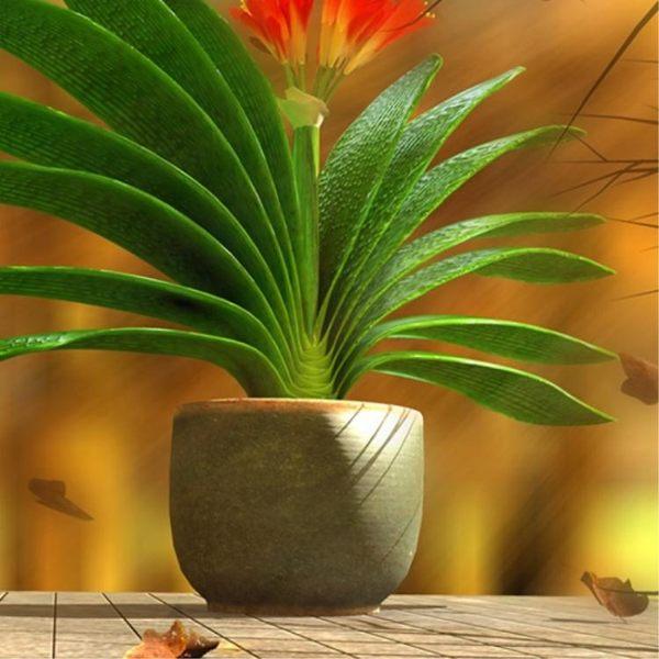盆栽君子蘭苗室內植物當年開花不斷好養的花 igo爾碩數位3c