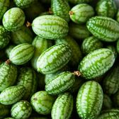 CARMO拇指西瓜種子 園藝種子(10顆)【FR0027】