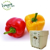 iPlant積木小農場-彩色甜椒