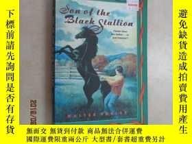 二手書博民逛書店son罕見of the black stallion 共282頁