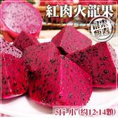 【家購網嚴選】屏東紅肉火龍果 5斤/盒 小(約12-14顆)