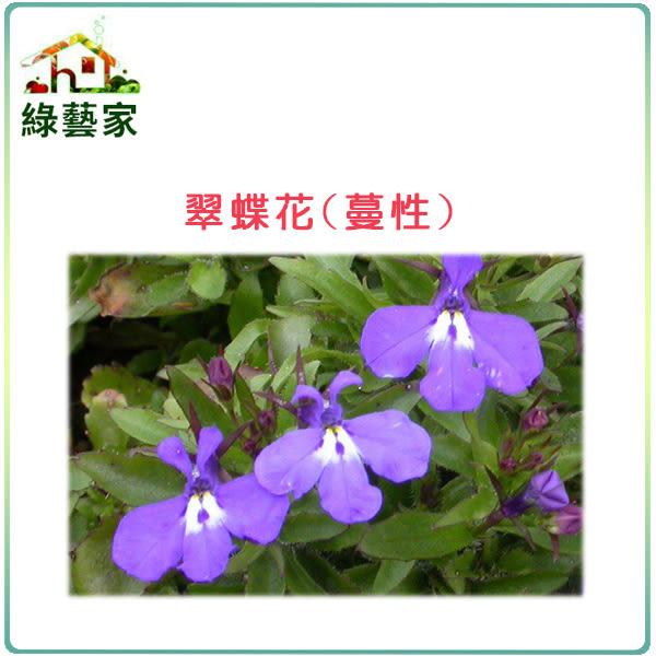 【綠藝家】H29.翠蝶花(蔓性)種子50顆