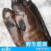 【台北魚市】  野生藍斑 450g