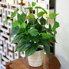 仿真盆栽 仿真植物盆景綠植塑料盆栽植物裝飾假小綠植盆栽假波斯葉仿真綠蘿