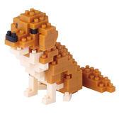 【日本KAWADA河田】Nanoblock迷你積木-黃金獵犬 NBC-168