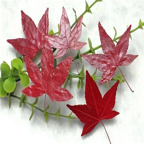 楓葉標本  滴膠乾花DIY手工花材押花材料乾花標本植物教學標本,一份5片裝