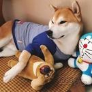 狗狗衣服夏季中型大型犬金毛柴犬拉布拉多秋冬薩摩耶寵物春夏薄款 衣櫥秘密