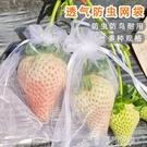 防鳥網 草莓防蟲袋水果套袋防鳥用網袋透氣陽台番茄無花果葡萄防蟲紗網袋 阿薩布魯