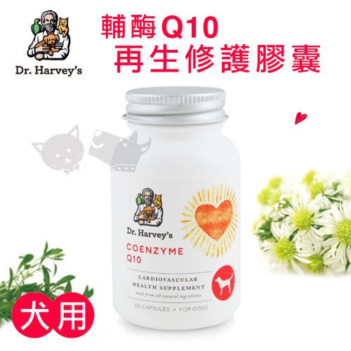 PetLand寵物樂園《Dr. Harvey s 哈維博士》犬用輔酶Q10再生修護膠囊(60顆/瓶裝)/寵物保健食品