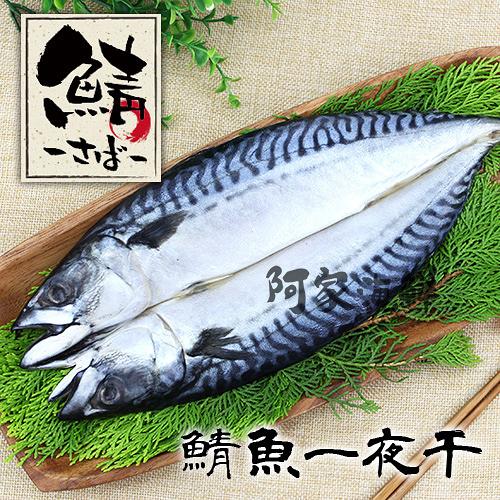 鯖魚一夜干370g±10% HACPP認證廠 高品質 新鮮 挪威薄鹽 鯖魚 白腹鯖 乾煎 炭烤 油脂豐厚 DHA快速出貨