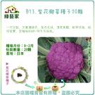 【綠藝家】B13.紫花椰菜種子20顆...