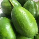 當天現採【酪梨】6台斤裝,農藥栽培,產地直送 (免運)