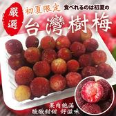 【果之蔬】楊梅(樹梅)水果X1盒【200克±10%/盒】
