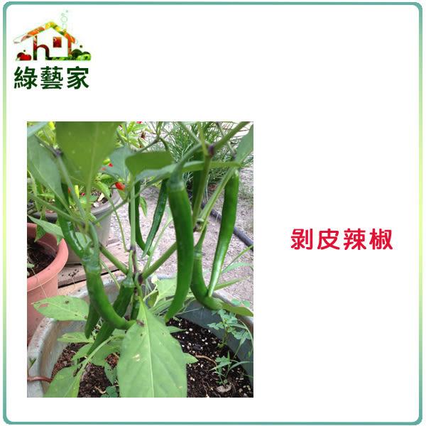 【綠藝家】大包裝G74.剝皮辣椒種子10.5克(約1500顆)