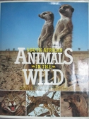 【書寶二手書T6/動植物_QHW】South African Animals in the Wild_Anthony