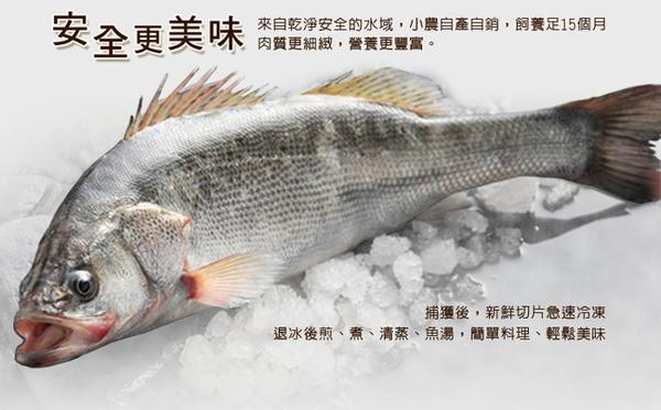 【大口市集】黃金鱸魚片(200-250g/片)