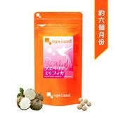 [MIJ] 日本 ogaland 白高顆濃縮錠(泰國野葛根) 300mg/180顆 大豆異黃酮 (效期:2019/3)