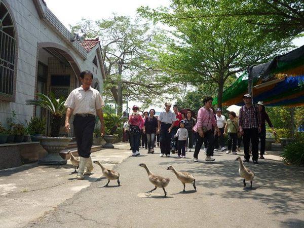[台南]台南鴨莊休閒農場-精緻單人田園美食一日遊