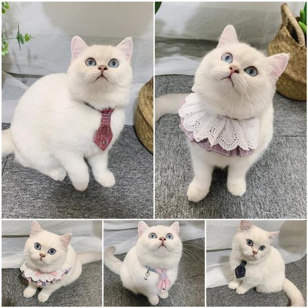 寵物口水巾貓咪項圈狗狗領結領帶圍兜宮廷蕾絲牽引繩裝飾品【宅貓醬】