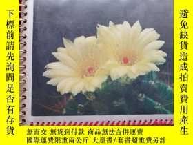 二手書博民逛書店八十罕見影集—圖案是兩朵花(沒用過、透明膜有幾張有摺痕、如圖)Y