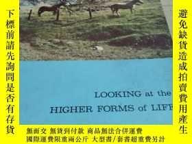 二手書博民逛書店LOOKING罕見AT THE HIGHER FORMS OF LIFEY452422 不祥 不祥 出版19