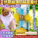 【培菓平價寵物網】美國CosmicCatnip宇宙貓 》100%全天然壓縮薄荷貓草玩具魔杖-嬉鬧羽毛