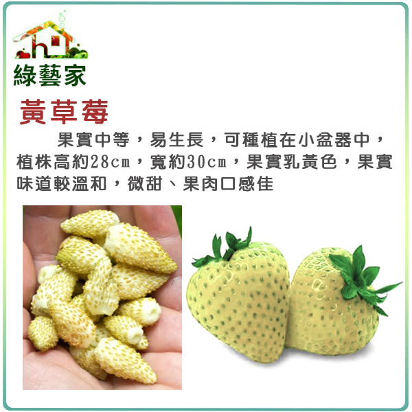 【綠藝家】I09.黃草莓種子8顆