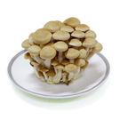 【陽光農業】鴻喜菇 (約100g/包)
