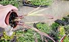 [香茅盆栽] 3寸盆 室外香草香料植物 多年生食用香草盆栽