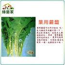 【綠藝家】大包裝A28.葉用蘿蔔種子40...