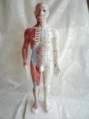 超清晰經絡通男女人體模型人體經絡模型銅人針灸穴位模型55CM高