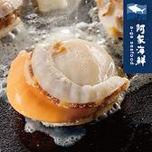【阿家海鮮】日本熟凍帆立貝(1kg/包.淨重800g/包) M規