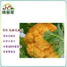 【綠藝家】大包裝B18.乳酪花椰菜種子5...
