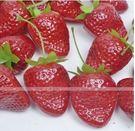 [協貿國際]仿真小草莓塑料假水果果盤 3入