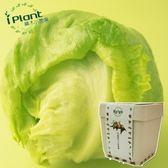 iPlant 積木小農場 - 萵苣