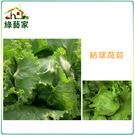 【綠藝家】B05.結球萵苣種子1500顆...
