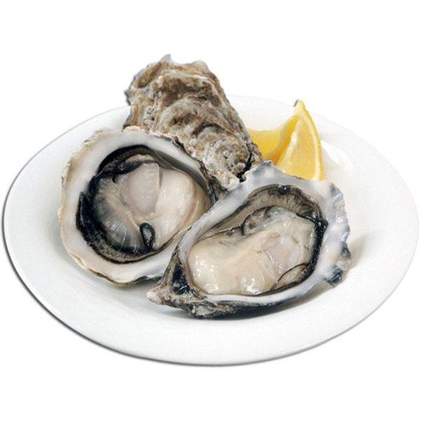 【微光日燿】澎湖帶殼牡蠣 2包組 (500g/包/約6~8顆)