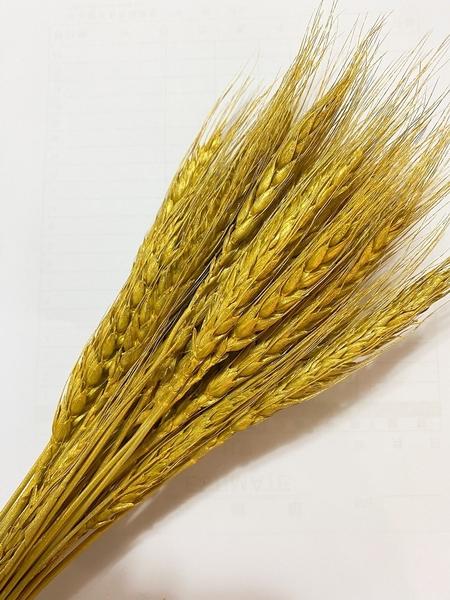 永生花花材,特殊金色銀色麥穗,一束10支裝