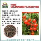 【綠藝家】大包裝G81.珍甜蕃茄種子0....
