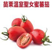 【果之蔬】苗栗溫室聖女蜜蕃茄X1盒(300g±10%含盒重/盒)