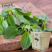iPlant積木小農場-九層塔