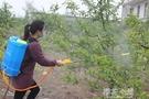 農用鋰電池背負式智慧電動噴霧器自動充電果樹農藥打藥機噴霧機QM『櫻花小屋』
