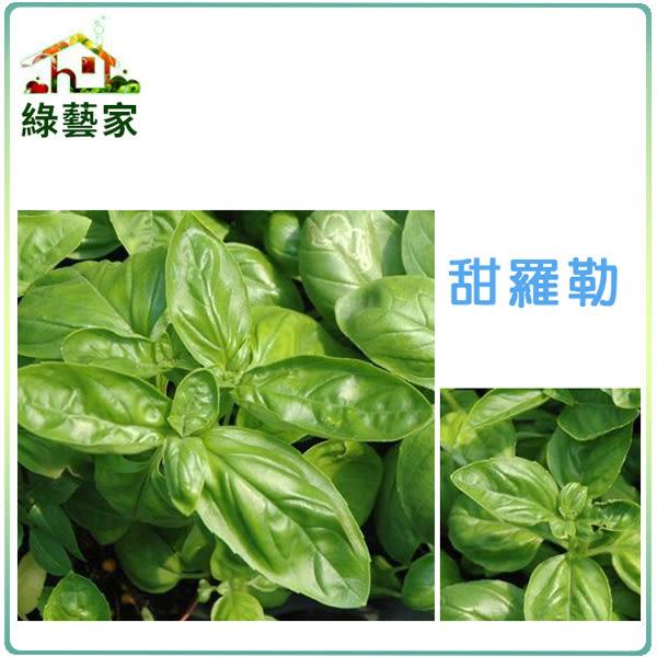 【綠藝家】大包裝K12.甜羅勒種子6克 (約3000顆)