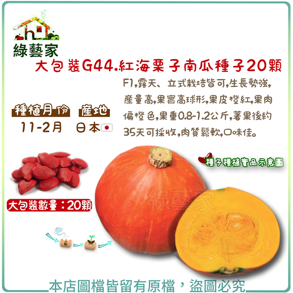 【綠藝家】大包裝G44.紅海栗子南瓜種子20顆