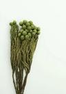 永生花花材 ,珊瑚果 ,長度約30公分,小份一支(果實多寡隨機出貨